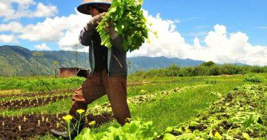 Cara menjual Produk Pertanian Secara Online