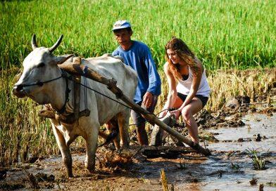 14 Desa Wisata Menarik Yang Bisa Dikunjungi di Jogja
